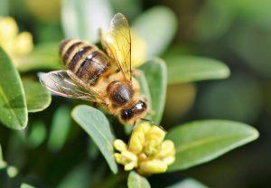 miód od pszczelarza produkcja